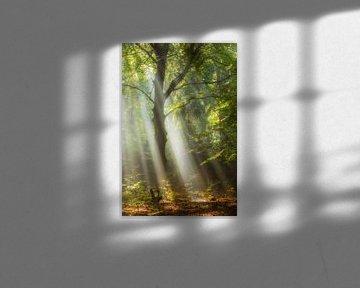 bosverlichting van Daniela Beyer