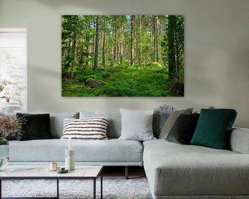 Zweeds landschap 011 van Geertjan Plooijer