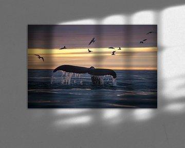 Mittsommernacht, oft die beste Zeit, um Wale zu beobachten. von Koen Hoekemeijer