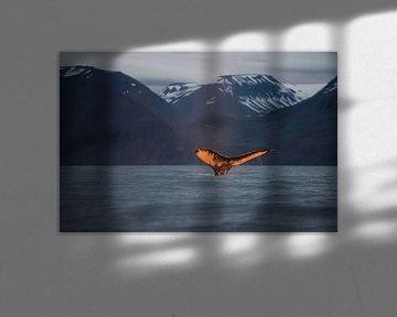 Die untergehende Sonne färbt den Schwanz dieses Wals wunderschön orange. von Koen Hoekemeijer