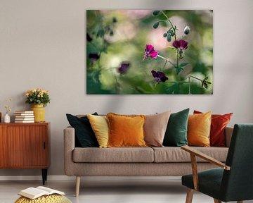 fel oplichtend paars bloemetje van de donkere ooievaarsbek