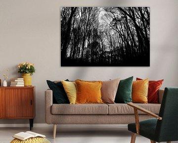 Spookachtig bos