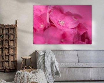 rosa Hortensie von Tania Perneel