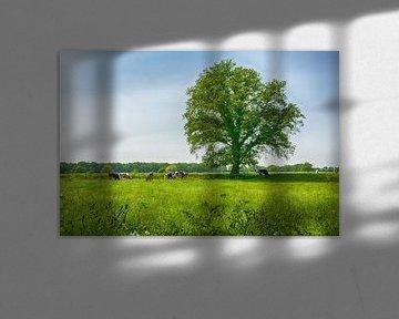 Prachtige boom in de weide
