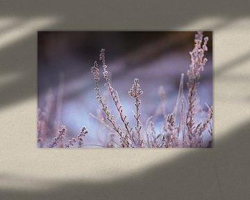 ijskristallen van Tania Perneel
