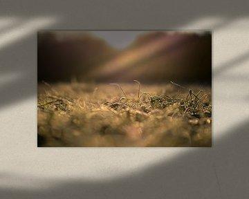 bevroren goud van Tania Perneel