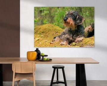 Portret van een ruwharige teckel in het bos van Shot it fotografie