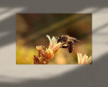 Een bij verzameld nectar en stuifmeel van Shot it fotografie
