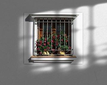 raam met planten von Frans Versteden