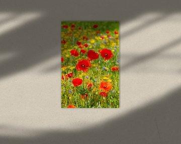 Ein Feld voller Wildblumen von John Kreukniet
