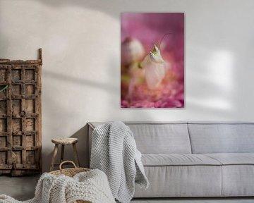 Orchidee bidsprinkhaan
