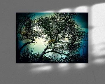 Luipaard in magische boom van Sharing Wildlife