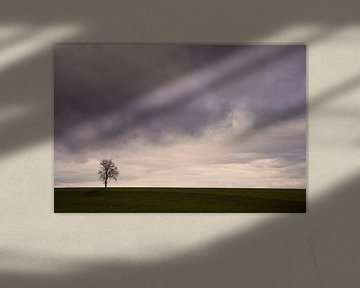 Lonely Tree von Lena Weisbek