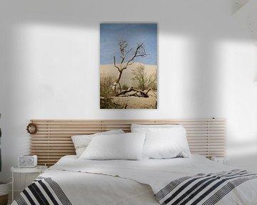 Oud hout in Death Valley van Hans Jansen