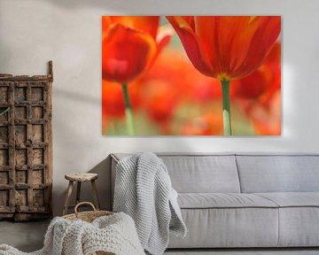Red Tulips von Carla Mesken-Dijkhoff