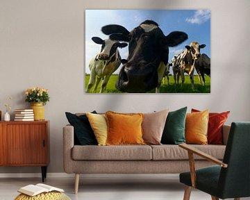 Gruppe von Kühen, die in die Linse schauen. von Sjoerd van der Wal