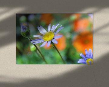 De dromerige bloementuin