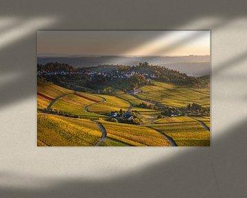 Wijngaarden in de herfst bij Stuttgart-Rotenberg van Werner Dieterich