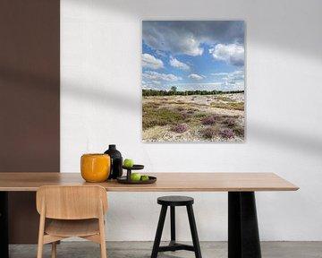 Pano Zuiderheide Laren Noord Holland, bloeiende heide en zandverstuiving van Martin Stevens
