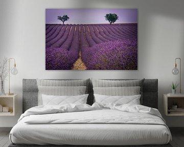 Lavendel landschap van Pieter van Dieren (pidi.photo)