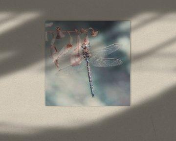 Libelle von Daniela Beyer