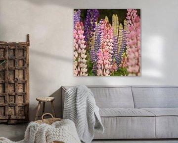 Kleurrijke lupine planten als groep bij elkaar van Shot it fotografie