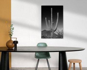 SAGUARO NATIONAL PARK Riesiger Saguaro Kaktus von Melanie Viola