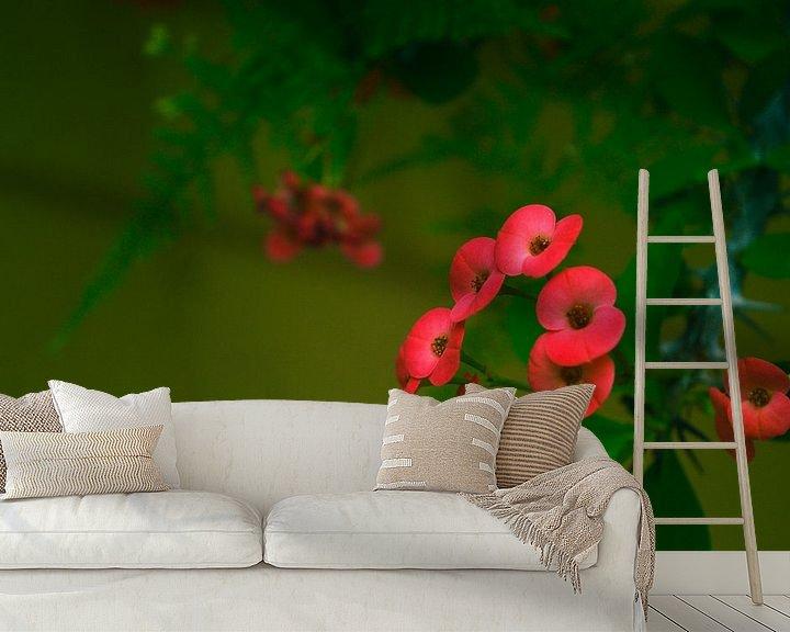 Sfeerimpressie behang: Christusdoorn in bloei van Daniëlle Beckers