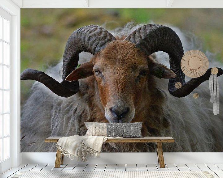 Sfeerimpressie behang: Drents heideschaap met gekrulde horens van Daniëlle Beckers