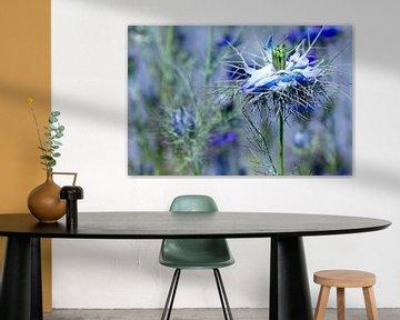 Blue beauty van YVON Bilderbeek