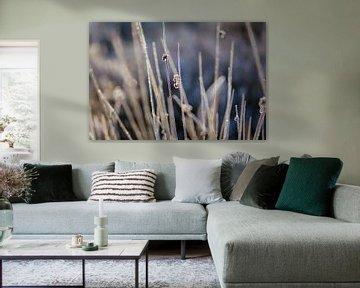 ijskoude grassen van Tania Perneel