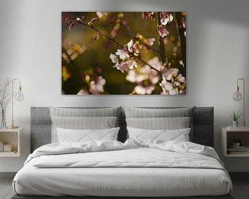 prunus bloesem van Tania Perneel
