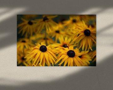 Gelbe Blumen von MSP Canvas