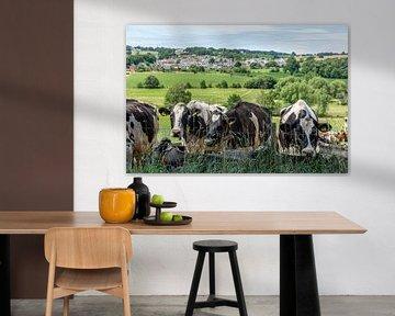 Neugierige Kühe in Südlimburg von John Kreukniet