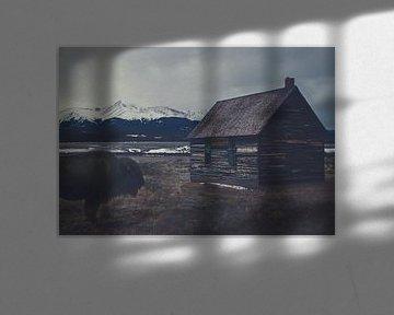 Bison dans une maison abandonnée