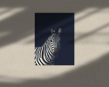 Dunkles Zebra von Hendrik Jonkman