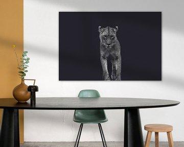 Portrait d'une jeune Lionne