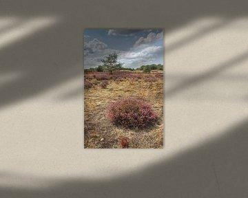De Drunense duinen van Peter Baan