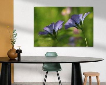 Fleurs violettes/bleues