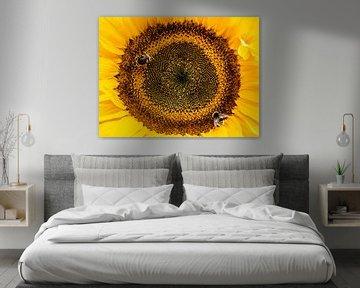 Hummeln auf Sonnenblume von Stijn Cleynhens