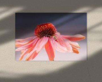 spinnetje op zonnehoed van Tania Perneel