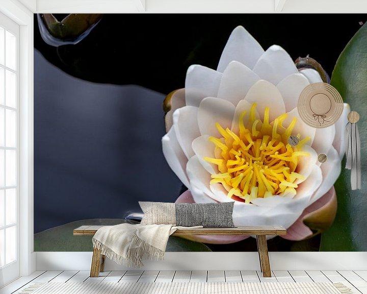 Sfeerimpressie behang: Drijvende witte waterlelie. van Anjo ten Kate