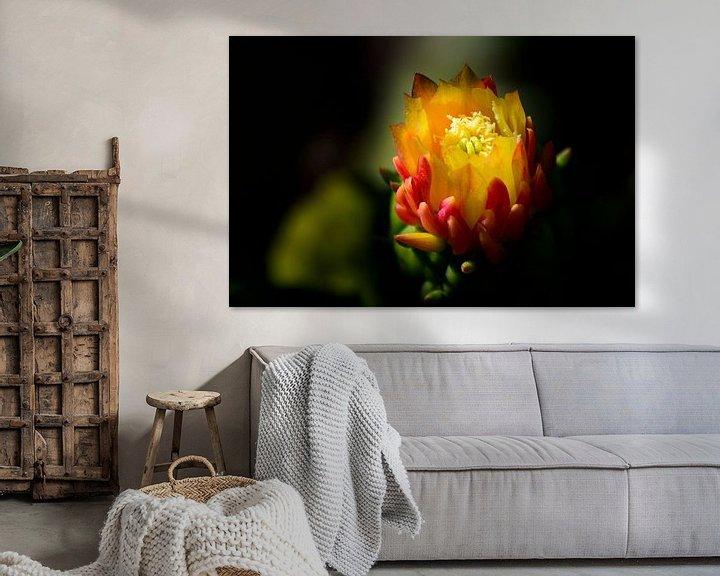 Sfeerimpressie: Cactusbloem van Ellen de Ridder