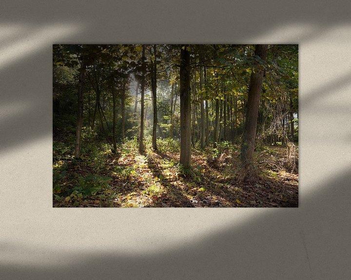 Sfeerimpressie: De zon door de bomen van Sander de Jong