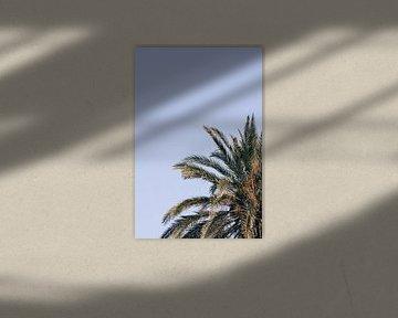 Goldene Palme (vertikal) von Daniel Houben