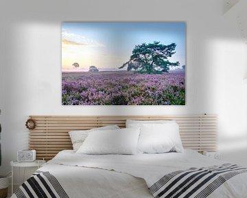 Blühende Heidekrautpflanzen in Heideflächenlandschaft bei Sonnenaufgang von Sjoerd van der Wal