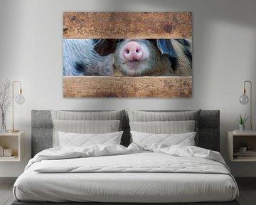 Schwein Nummer zwei von Fred en Roos van Maurik