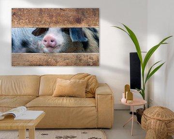 Schwein Nummer 6 von Fred en Roos van Maurik