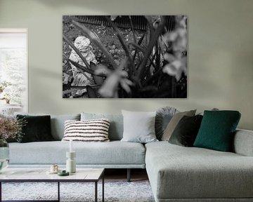 Beeld van meisje door narcisplanten heen (zwart-wit)