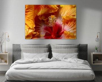 Makro eines rot-orangenen Hibiskus von W J Kok